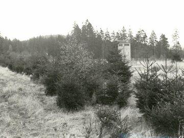 Über ein paar niedrige Tannen hinweg wurde ein im hohen Gras und vor einem Waldrand gelegener Beobachtungsturm fogtografiert.