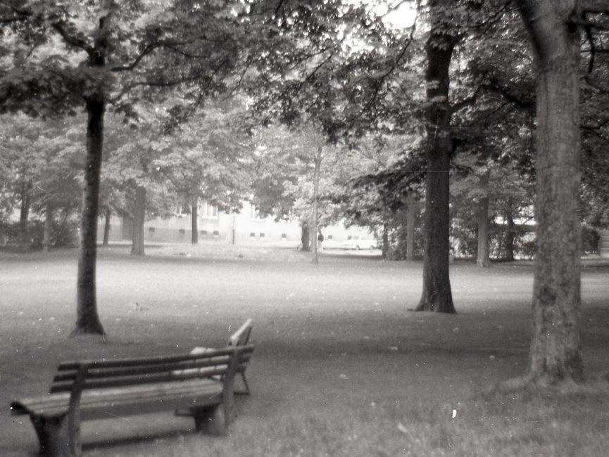 [Das schwarzweiße Negativ zeigt den Blick durch zwei Bäume auf eine vermeintliche Parkfläche. Am unteren Bildrand stehen zwei Parkbänke. Im Anschluss an die mäßig große Rasenfläche stehen weitere Baumreihen, im Hintergrund sind zwei Personen und eine angrenzende Häuserzeile zu sehen.]