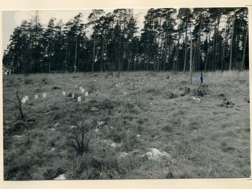 [Das aufgeklebte schwarzweiße Lichtbild zeigt im Hintergrund einen Waldrand. Die Fläche davor ist voller Gräser mit einigen Sträuchern sowie einem Baumstumpf im rechten Bildbereich, der händisch mit einem blauen Pfeil markiert. In der linken Bildhälfte sind die Rückseiten von aufgestellten weißen Zahlkarten zu sehen.]