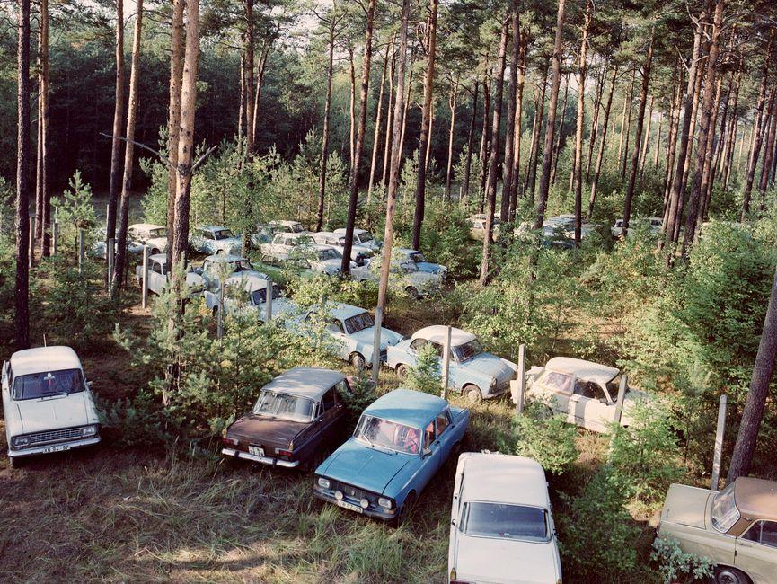 Das Bild zeigt mehrere Fahrzeuge, die in einem Wald zwischen Nadelbäumen geparkt wurden.